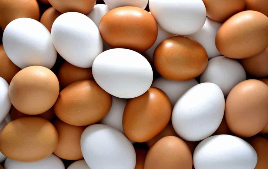 Утилизация яиц